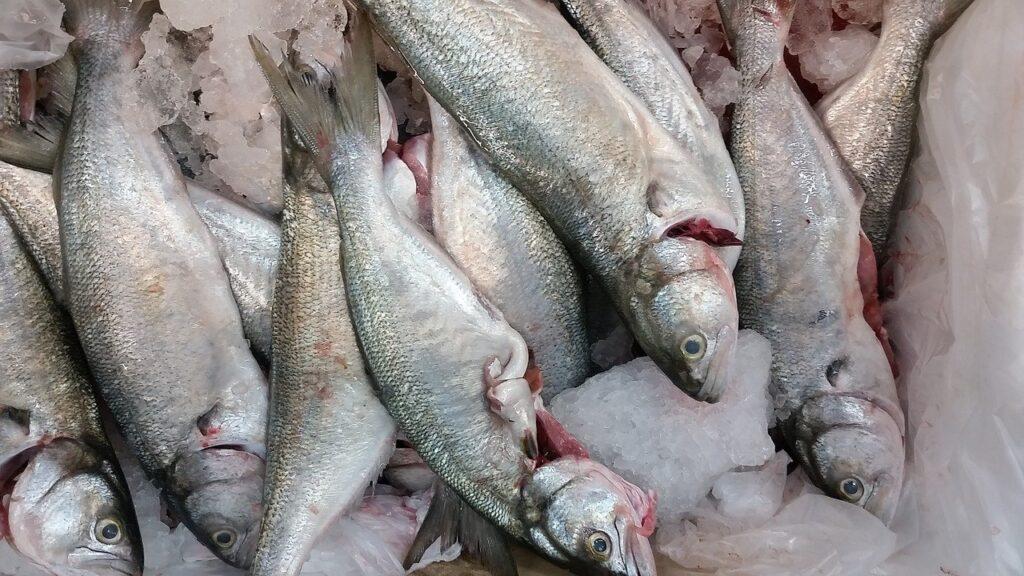 fish, shop, fishmonger